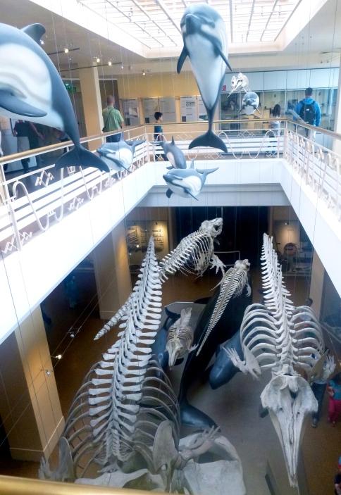 Nouvelle aile de la Grande galerie de l'évolution ? Non, Musée de la mer à Biarritz ! © JITMF