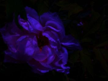 Photo 043