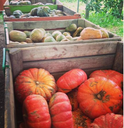 Getting organic veggies (especially pumpkins) just outside of Paris at Gally. Instagram Maja Savic.